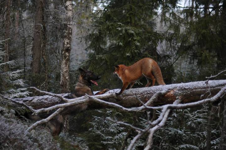фото, животные, необычная дружба (6)