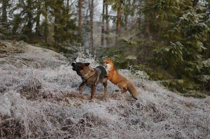 фото, животные, необычная дружба (8)
