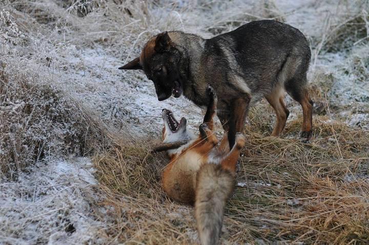 фото, животные, необычная дружба (2)
