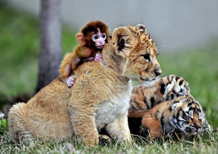 фото, животные, прикольные фото животных (14)