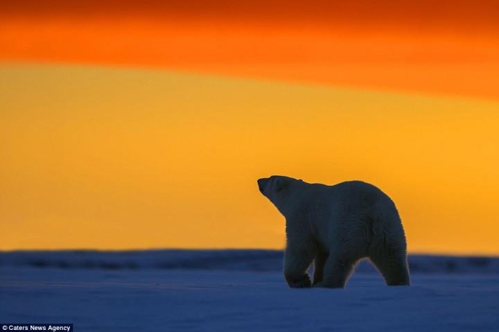 фото, животные на закате (8)