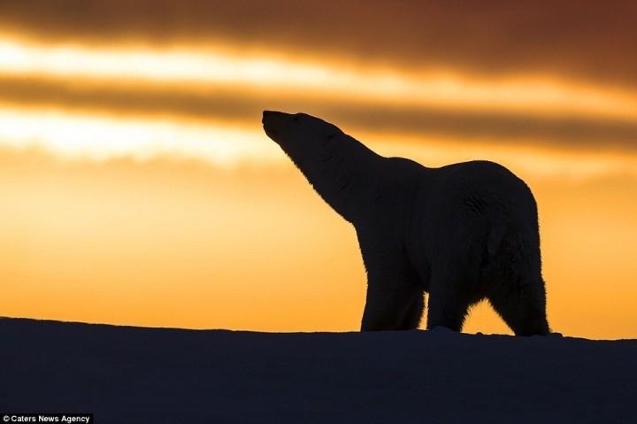 фото, животные на закате (9)