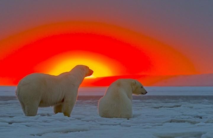 фото, животные на закате (1)