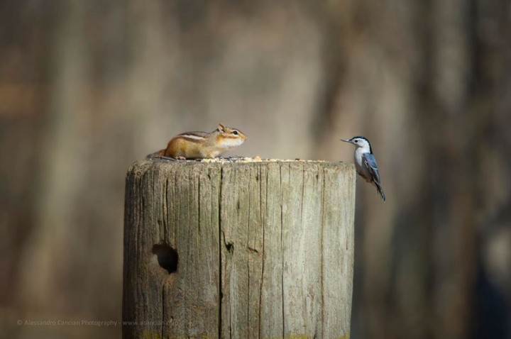 фото, животные, прикольные фото животных (6)