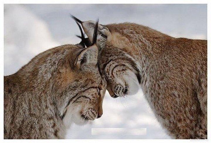 фото, животные, прикольные фото животных (8)