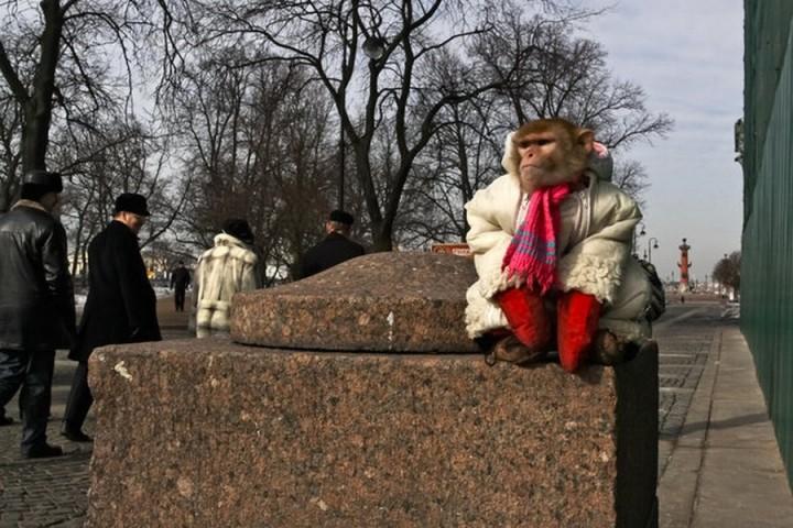 фото, ностальгия, повседневная жизнь в Санкт-Петербурге, города, люди (22)
