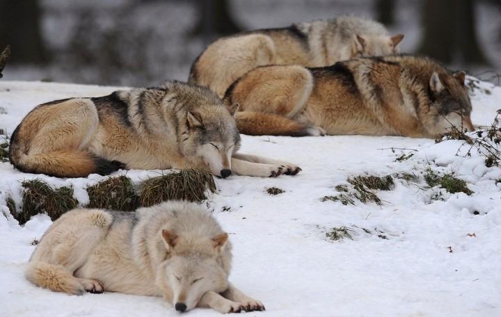 фото, животные (3)