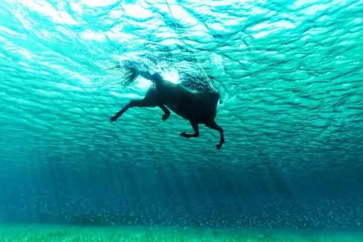 фото, подводные фото (5)