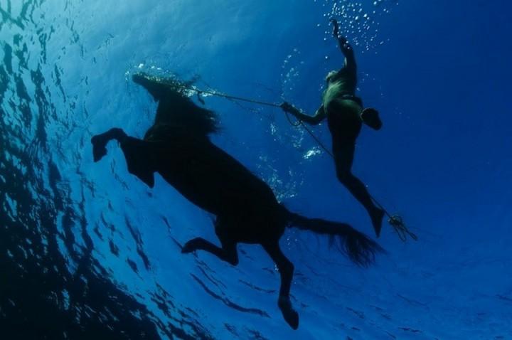 фото, подводные фото (6)