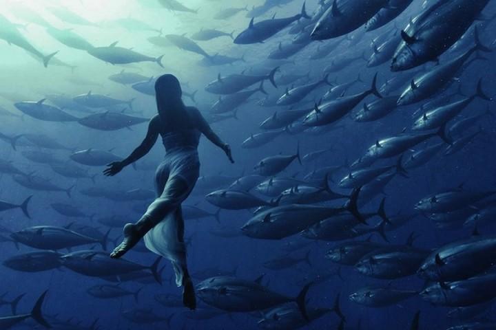 фото, подводные фото (1)