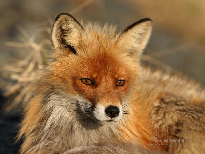 фото, животные (2)