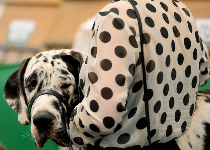 фото, животные, прикольные фото животных (20)