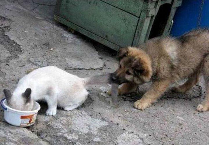 фото, животные, прикольные фото животных (2)