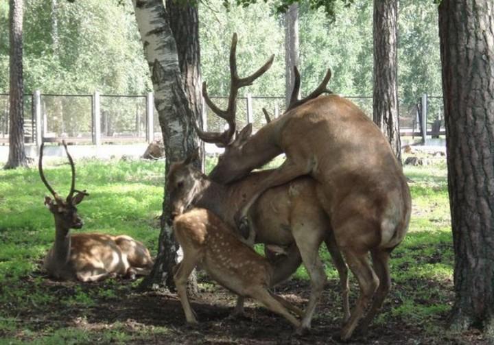 фото, животные, прикольные фото животных (22)