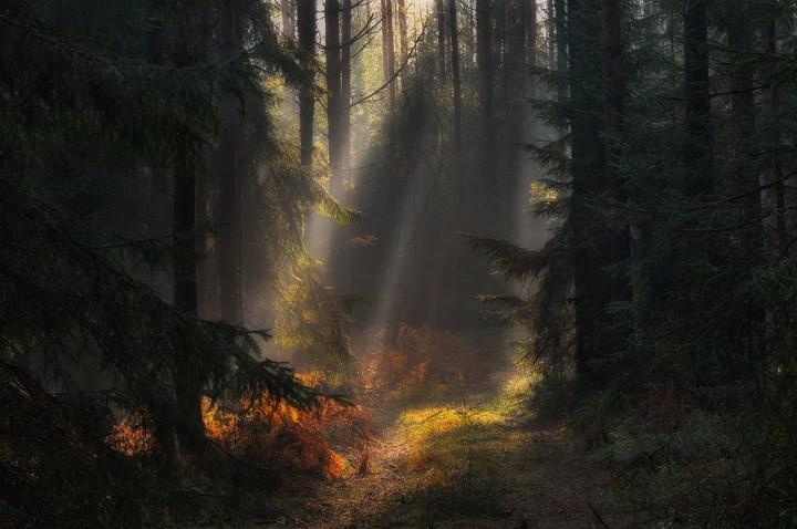 фото, природа, красивые фото природы, фотопейзажи (7)