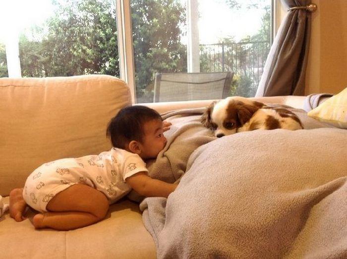 дети, животные (10)