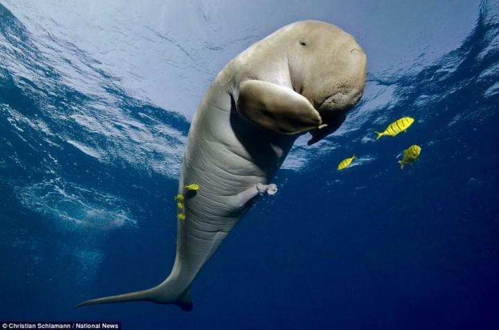 фото, океан, животные (1)