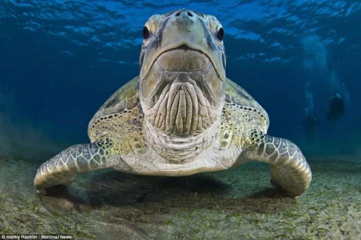 фото, океан, животные (3)