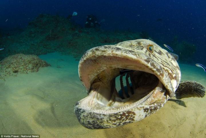 фото, океан, животные (5)