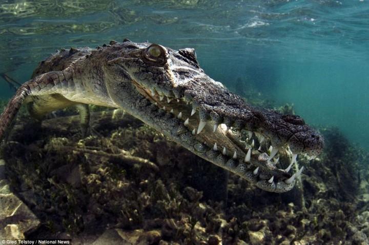 фото, океан, животные (2)