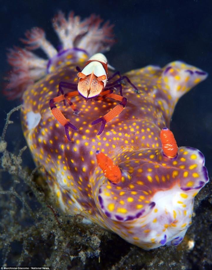 фото, океан, животные (7)