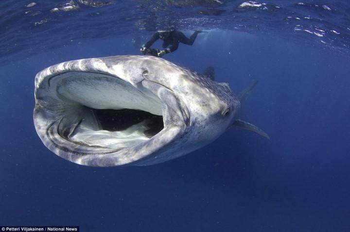 фото, океан, животные (4)