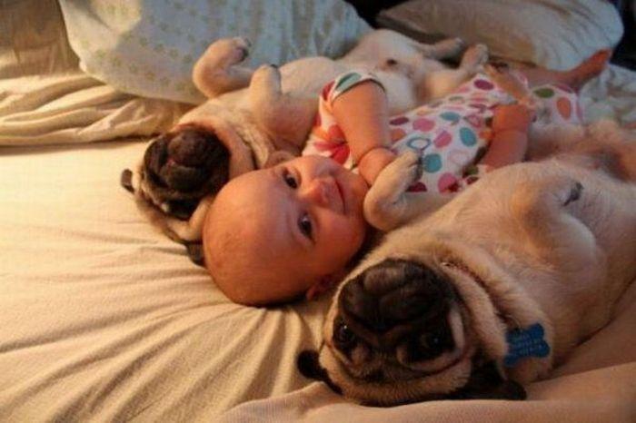 дети, животные (3)