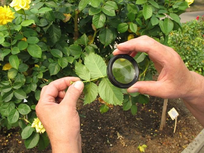 Вредители садовых растений