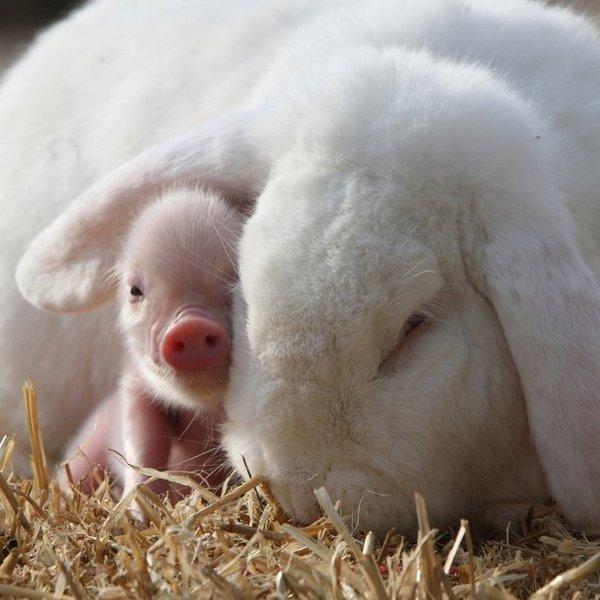 фото, животные, прикольные фото животных (16)