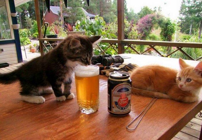 фото, животные, прикольные фото животных, кошки (1)