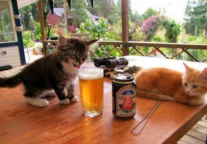 фото, животные, прикольные фото животных, кошки (2)