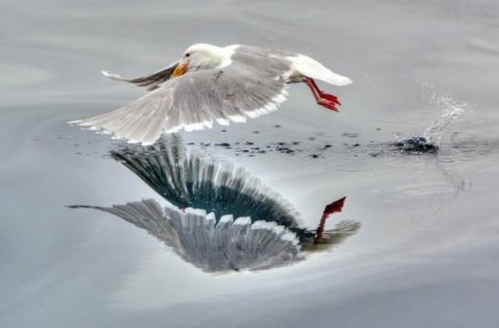 птицы (16)