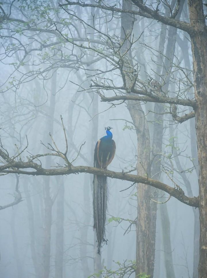 природа, красивые фото природы, фотопейзажи (19)