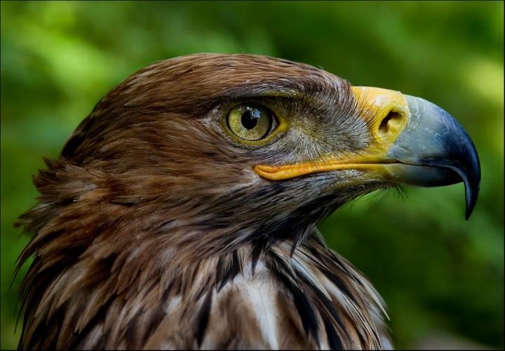 птицы (12)
