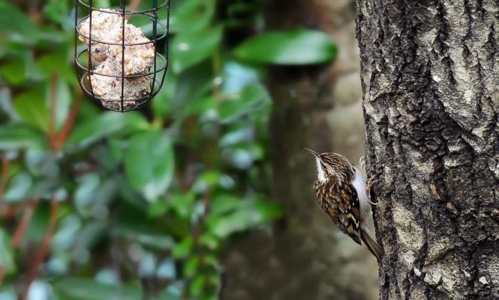 птицы (15)