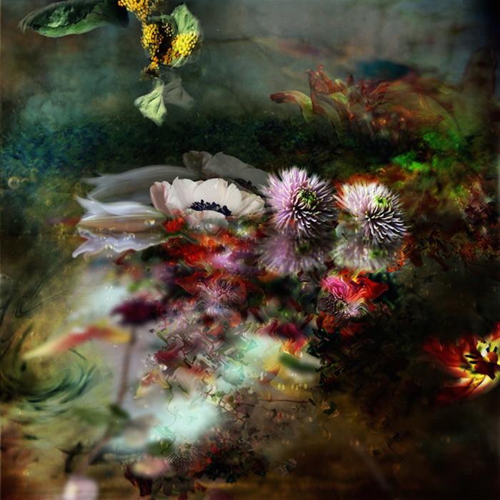 цветы, красивые фото цветов (3)
