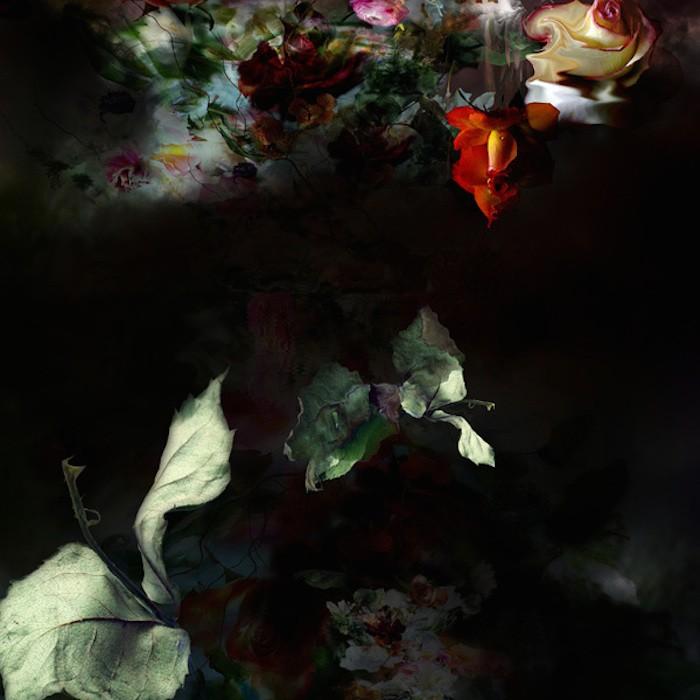 цветы, красивые фото цветов (4)