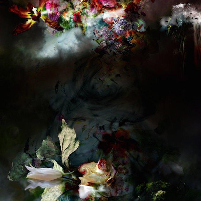 цветы, красивые фото цветов (6)