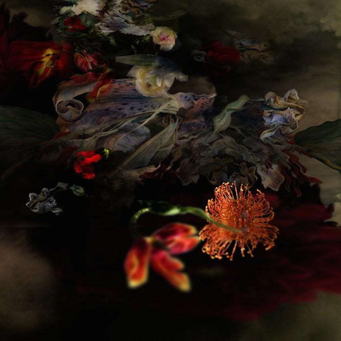 цветы, красивые фото цветов (8)