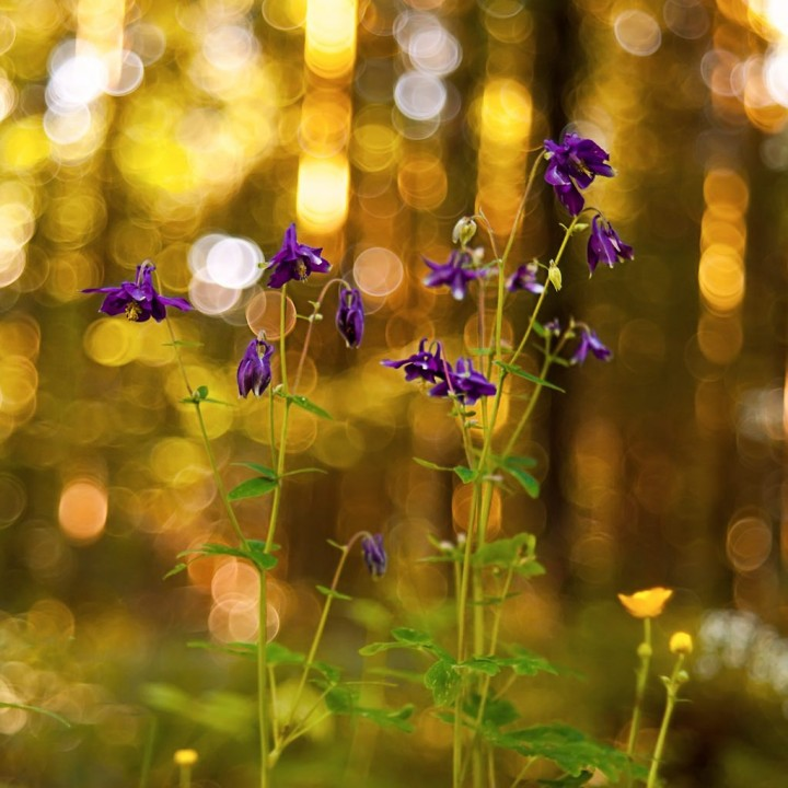 цветы, красивые фото цветов, боке (10)