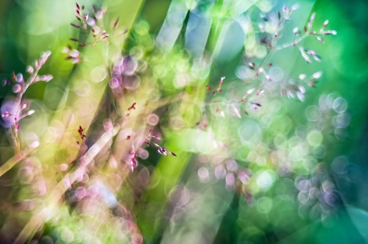 цветы, красивые фото цветов, боке (7)