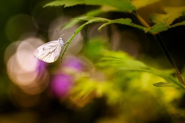 цветы, красивые фото цветов, боке (4)