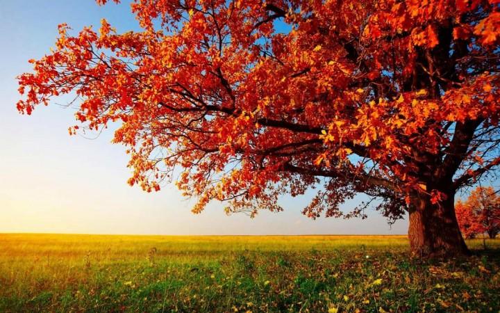 природа, красивые фото природы, фотопейзажи, осень (12)
