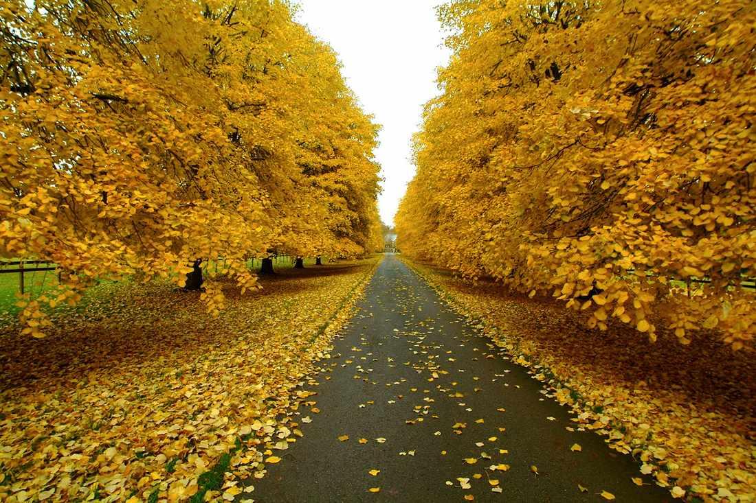 картинка наступила золотая осень этот период деактивировал