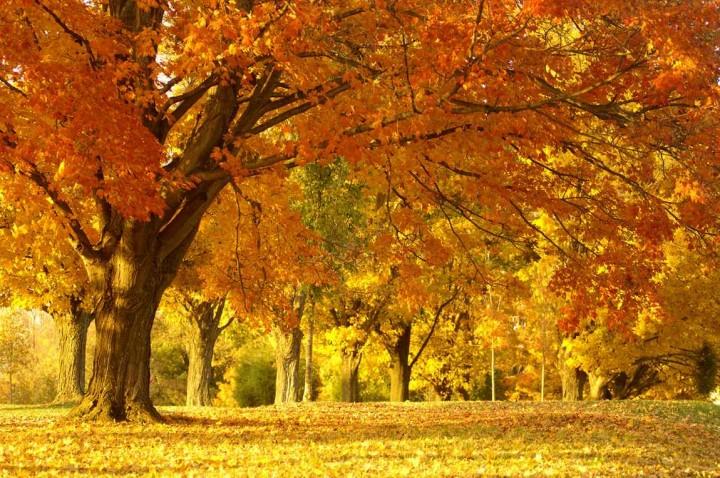 природа, красивые фото природы, фотопейзажи, осень (6)