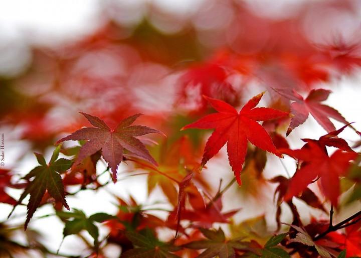 природа, красивые фото природы, фотопейзажи, осень (4)