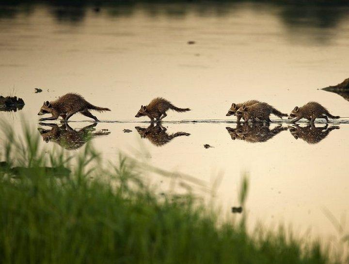 животные, юмор (5)