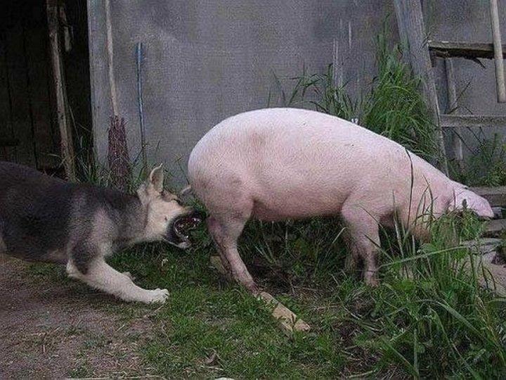 животные, юмор (13)
