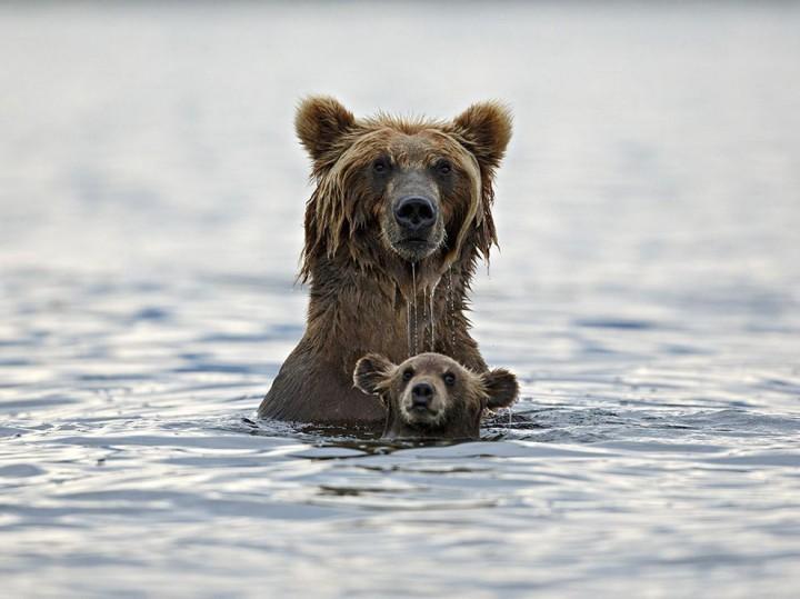 Прикольные фото животных (1)