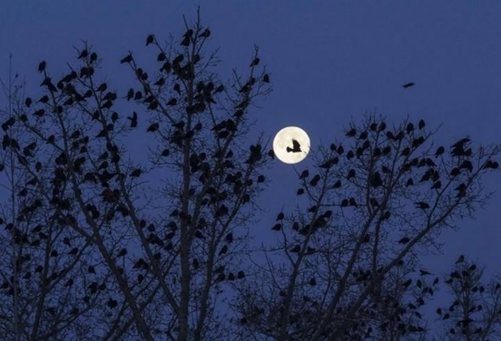 фото луны (4)